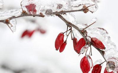 Gør din have vinterklar