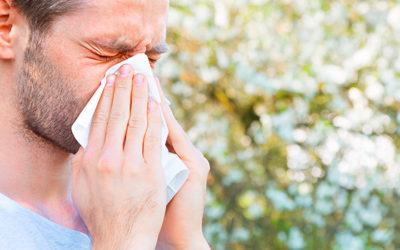Er du allergiker? Sådan gør du din have allergivenlig