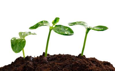 Økologi i haven