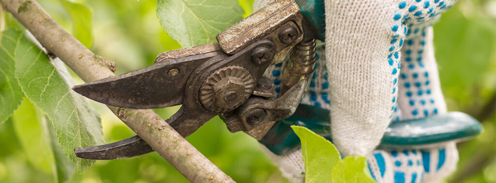 Beskæring af buske og træer