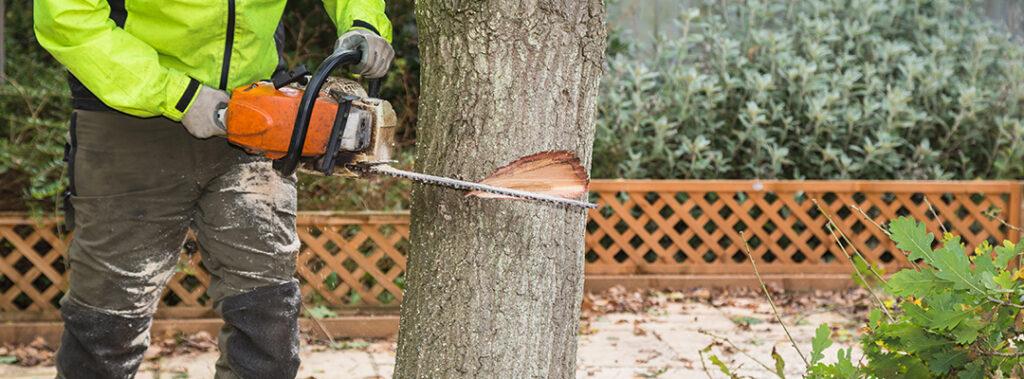 Fældning af træer