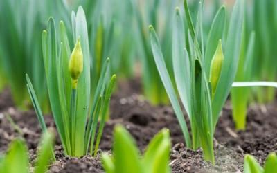 Mine tips til forårsklargøring af haven