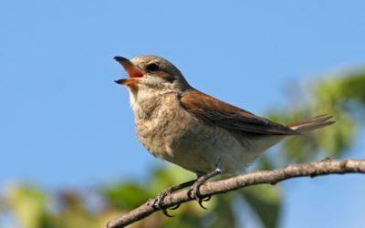 Vi hjælper dig til en fuglevenlig have