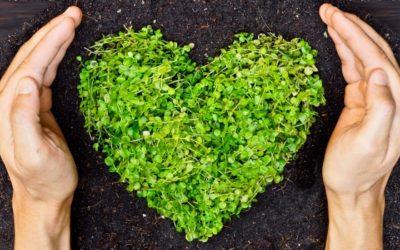 Passer du på vores natur? Det gør vi hos Hus og Have Hjælpen