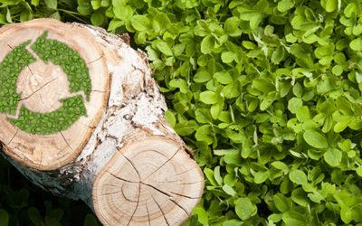 Sådan gør du din have bæredygtig